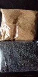 Bird Food in Rajkot, बर्ड फूड, राजकोट, Gujarat   Get