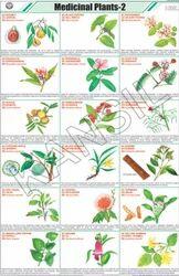 Medicinal Plants -II For General Chart