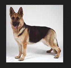 Dog Squad Guards