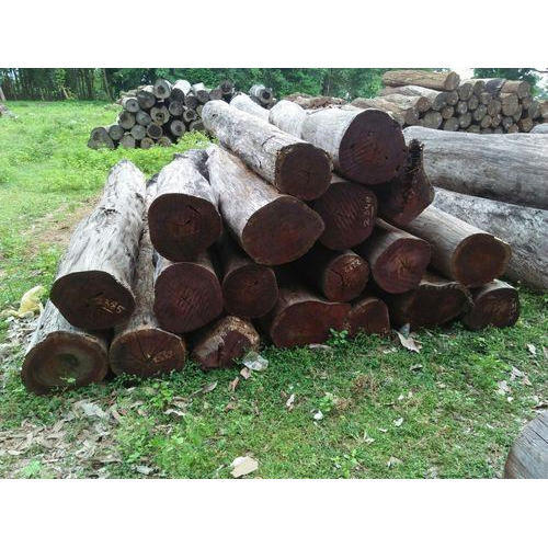 Natural Wood Color Forest Irool Pine Logs
