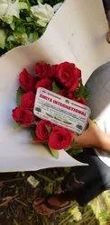 Mirabel Red Rose Flower