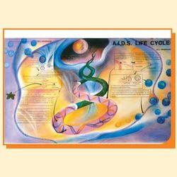A.I.D.S. Life Cycle Model Chart