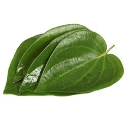 Betel Leaf  Fragrance