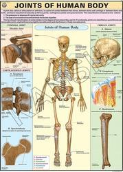Joints of The Body For Human Physiology Chart