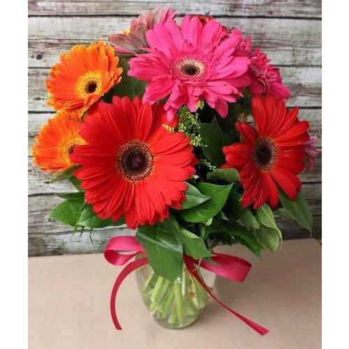 Gerbera Fresh Cut Flower African Daisy Flower गरब र क फ ल गरब र फ ल वर Eden Flora Bengaluru Id 19942294197