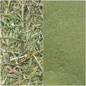 Kalmegh powder (Nilavembu) (Andrographis paniculata)
