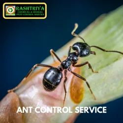in Home Bee Ant Pest Control Service