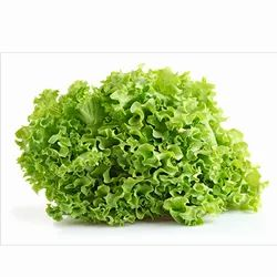 Lettuce Curly