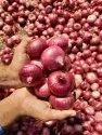 Pink Onion A Grade Red Onions, Packaging Size: 10 Kg, Onion Size Available: Large
