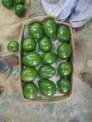 Avocado - Wholesale Price & Mandi Rate for Avocado Fruit