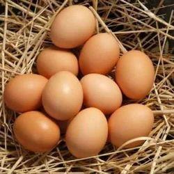 Desi Egg
