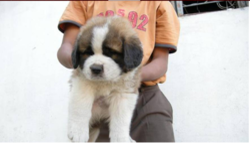 Pet Vacccination Service