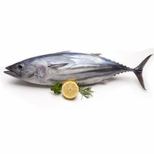 tuna fish for restaurant and household rs 150 kilogram global