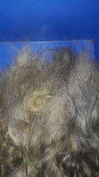 Virgin Grey Hair