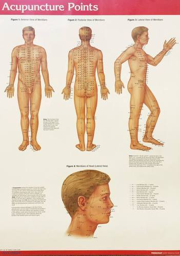 Acupuncture points chart at rs 180 piece