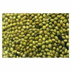 Green Coriander Seed, Packaging Type: Jute Bag