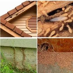 Yearly Commercial Termite Pest Control Services, Delhi