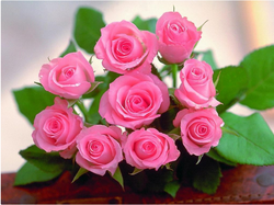Sweet My Day Flowers Pink Nature Roses