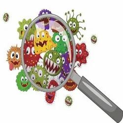 Antibacterial Activity Testing Services