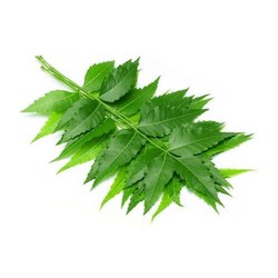 Aushadhi Herbal Neem Leaf Extract