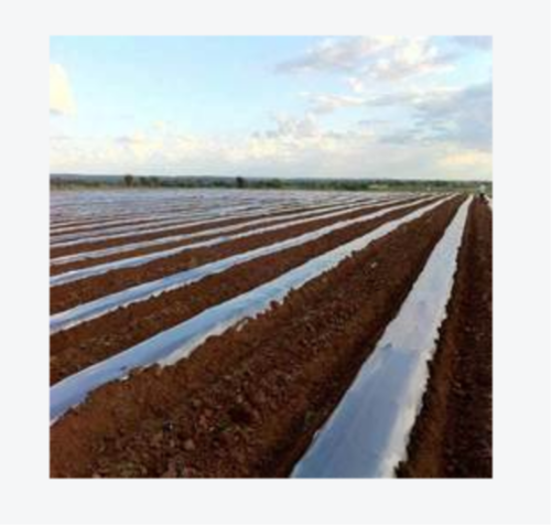 Plastic Soil Solarisation Film