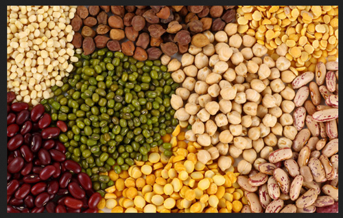 Agri Commodity in Andheri West, Mumbai | ID: 19111474888