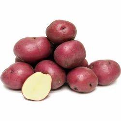 Fresh Healthy Potatoes