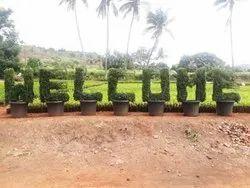 Round Plastic Topiary plant, For Garden