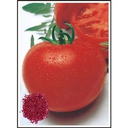 DS - 122 Super Selection Tomato Seeds