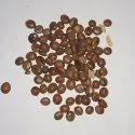 Cassiaa Nodosa Seed