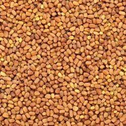 Kalmegh Seed