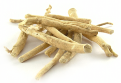 Ashwagandha / Indian Ginseng