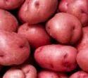 Red Potato Vegitable