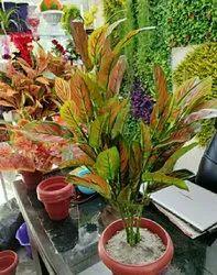 Hyperboles Artificial Plants