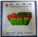 Known You Seeds Capsicum Seed Ayesha, Pack Size: 10 Gm