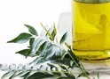 Curry Leaf Natural Essential Oils