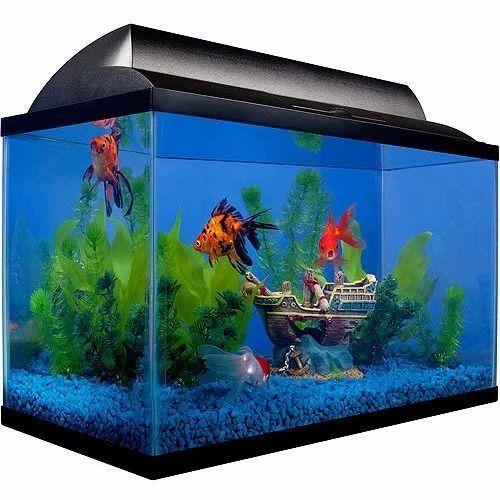 Fish Aquariums at Rs 5000/piece   एक्वेरियम टैंक - Fins Aquarium & Pets,  Nashik   ID: 15556608955