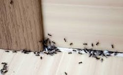 in Home Spray ANT CONTROL