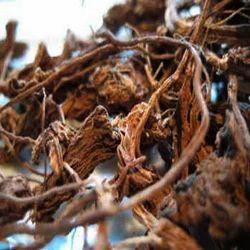 Coleus Root Extracts