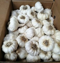 Garlic in Coimbatore - Latest Price & Mandi Rates from