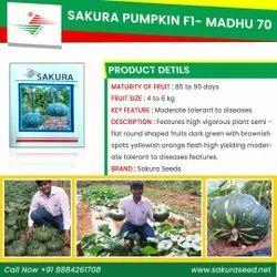 Hybrid Green Pumpkin Seeds- F1 Madhu-70, Packaging Type: Pouch & Tins, Packaging Size: 10gm,25gm & 50gm