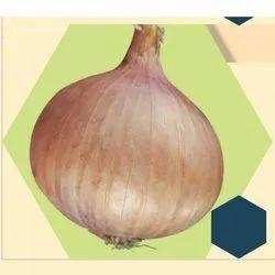 Golden Onion Seeds