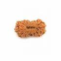 Light Brown 18 Mukhi Savar Rudraksha, Packaging Type: Packet
