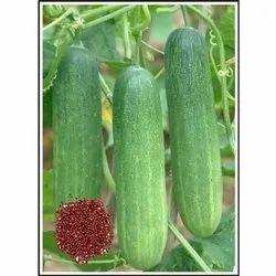 Mala Hybrid Cucumber Seeds