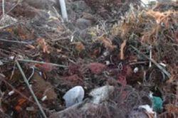 Copper Birchcuff Scrap