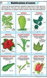 Leaf Modification For Botany Chart