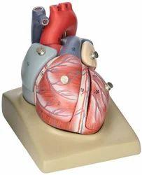 Human Heart (7 Parts) ZX-1405E Models