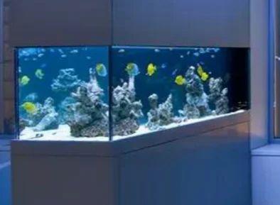 Shad Fish Aquarium Shop Retailer Of Fish Aquarium Fish Aquarium