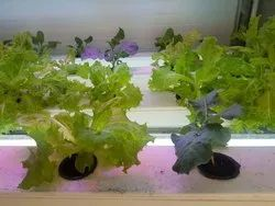 Hydroponic Environment Control Indoor Vegetable Machine