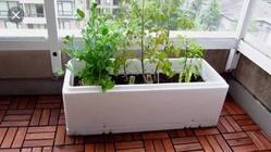 Thermocol Customized Boxes for Plants and Flowers